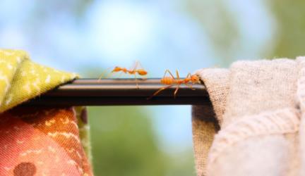 localizar si hay cucarachas en casa
