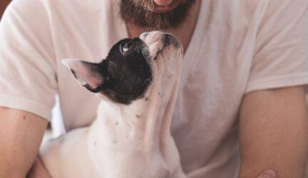 Amor de perro