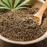 ¿Pueden las semillas de cannabis mejorar realmente tu salud? Todo lo que siempre quiso saber sobre las semillas de cannabis
