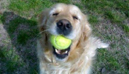 Cómo saber si mi perro tiene leishmaniosis