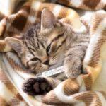 Cómo saber si tu gato está enfermo